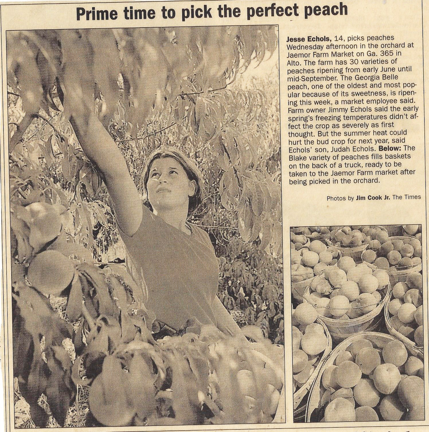 Jesse Echols picking peaches in newspaper clipping