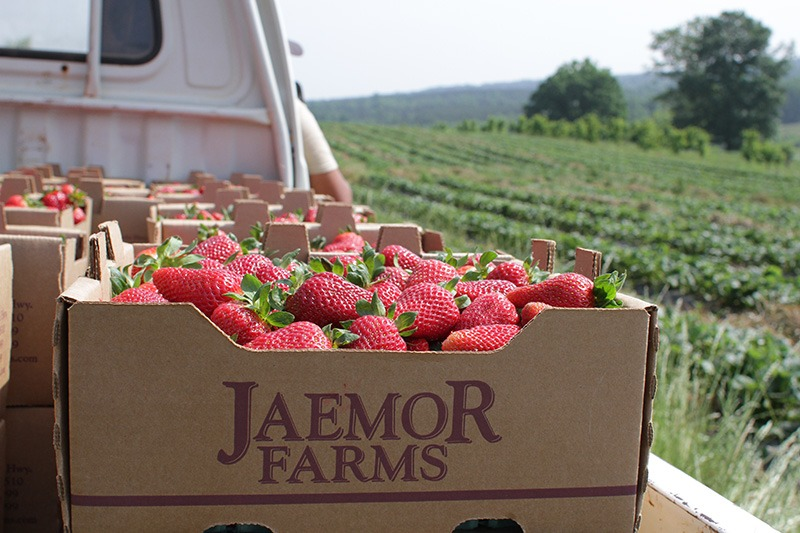 Picture of strawberries in basket on back of a truck
